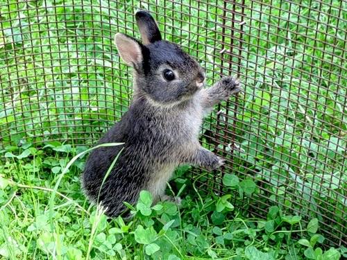 Все об уходе за декоративными кроликами в домашних условиях
